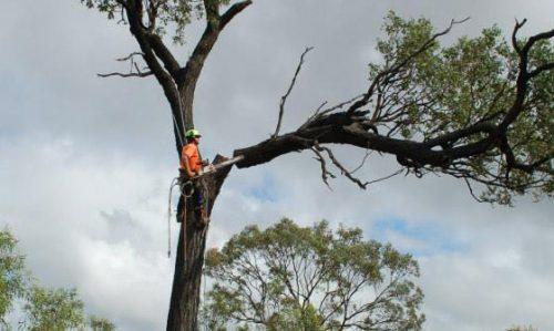 Treeworx Tree Removal & Pruning